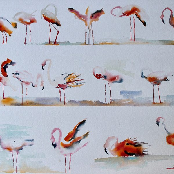 Les Flaments Rose 57x76