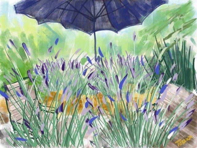 Lavender under the parasol