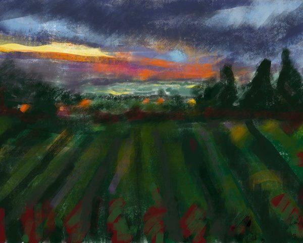 sunrise on the vineyard